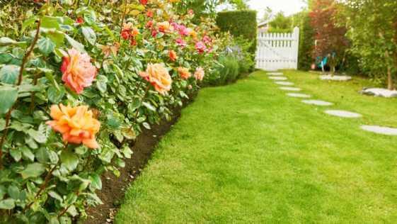 Flower garden with green lawn