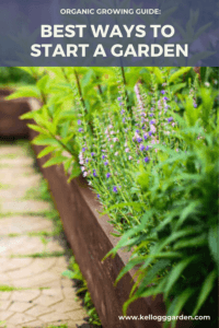 raised bed garden with lavender being grown in it pinterest image