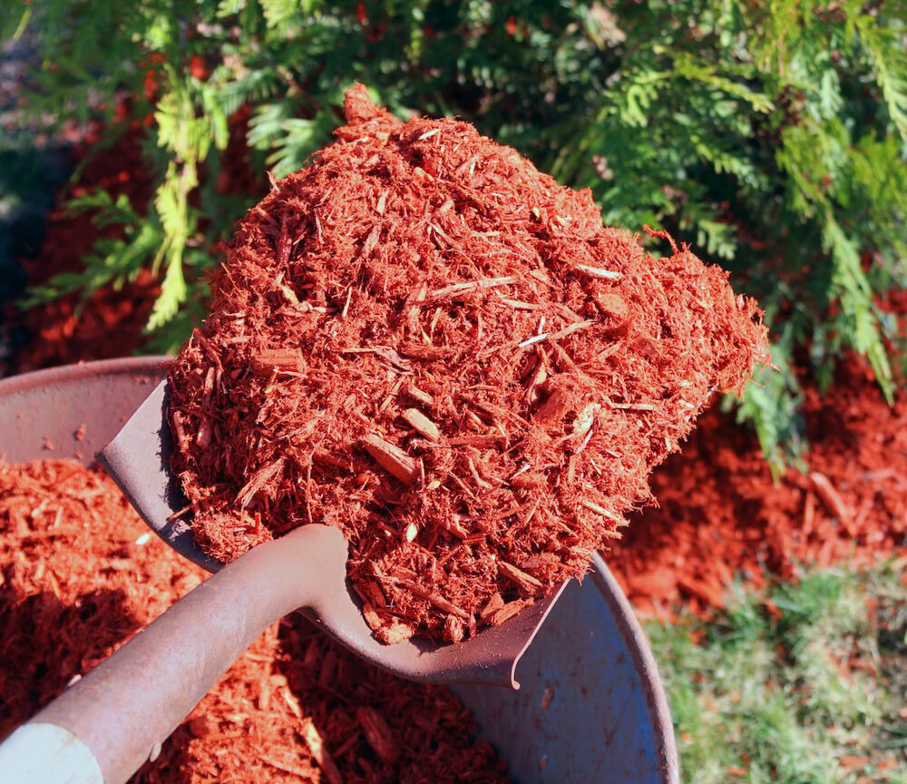 Red mulch on the shovel and in the wheelbarrow