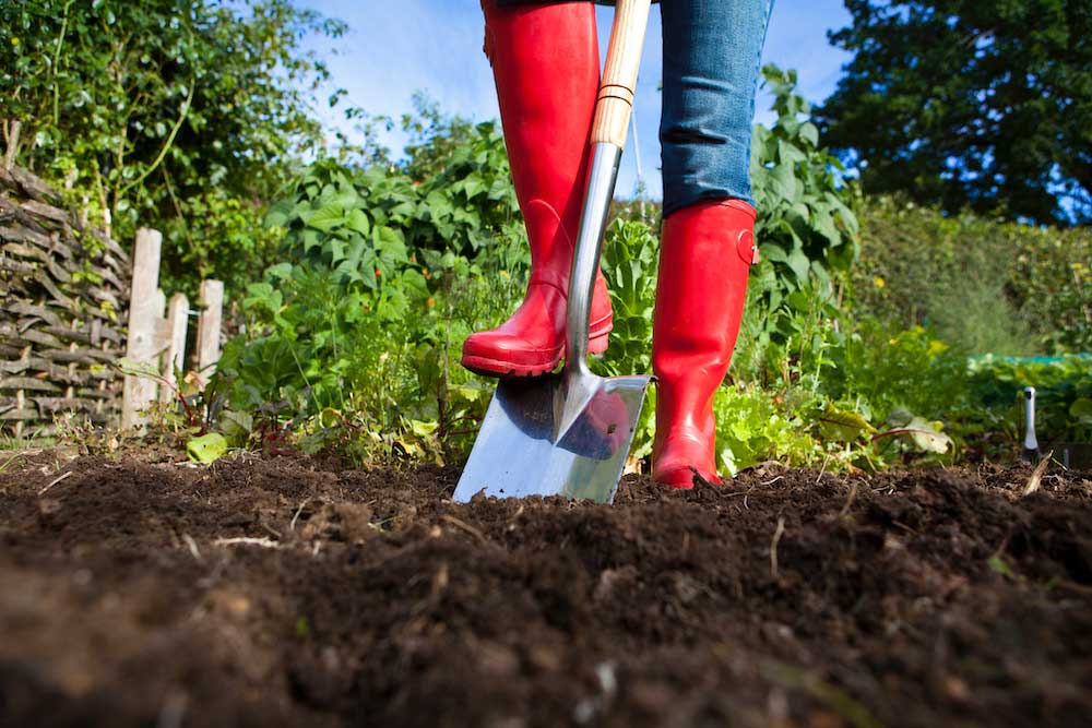 gardener with red boots digging the garden with a shovel