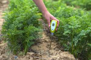 Green plants and woman farmer measure PH and moisture in the soil with testing device