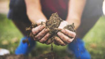 Hands holding garden soil