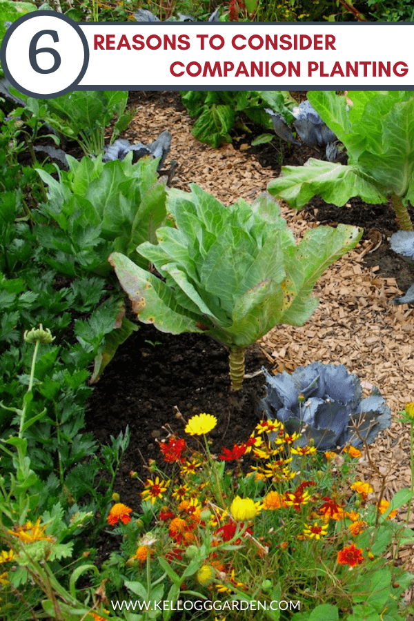 vegetable and flower in a garden