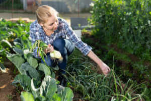 woman harvest green onion in vegetable garden