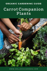 """Kids working in carrot garden with text, """"Organic gardening guide, carrot companion plants'"""