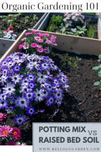 """Raised bed garden with flowers with text, """"Organic gardening 101, Potting mix vs raised bed soil"""""""