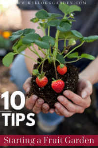 """Strawberry plant in womans hands with text, """"10 tips, starting a fruit garden"""""""