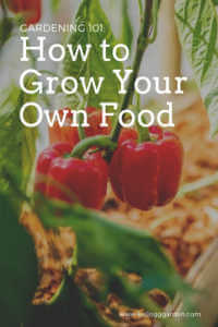 """Red bell pepper growing with text, """"How to grow your own food"""""""