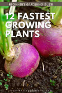 """Radishes growing with text, """"12 faster growing plants. Beginners gardening guide"""""""