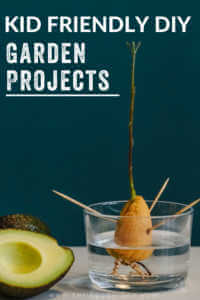 """An avocado seed growing in water with text, """"Kid Friendly DIY Garden Projects""""."""