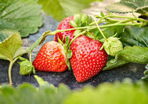 Strawberry fruits growing in garden