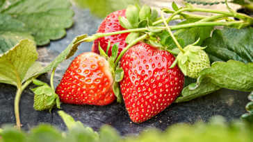 Strawberry fruits growing in garden