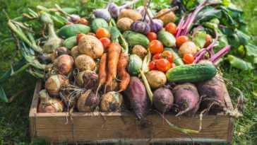 Fresh farm vegetables in wooden box