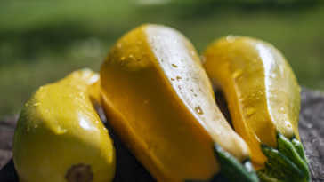 Fresh raw yellow zucchini on wooden table, bright sunny background.