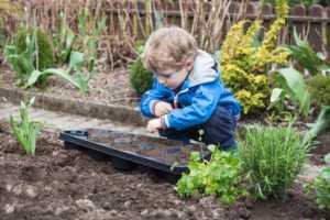 blonde boy planting seeds in vegetable garden