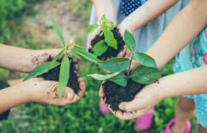children plant plants together in their hands