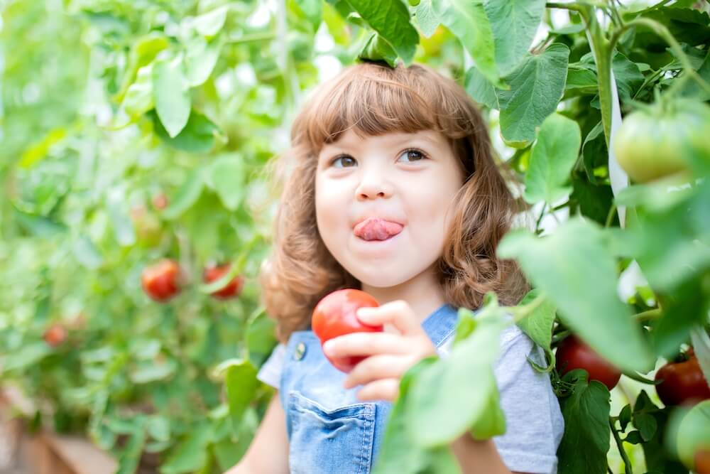 little girl holding a red tomato