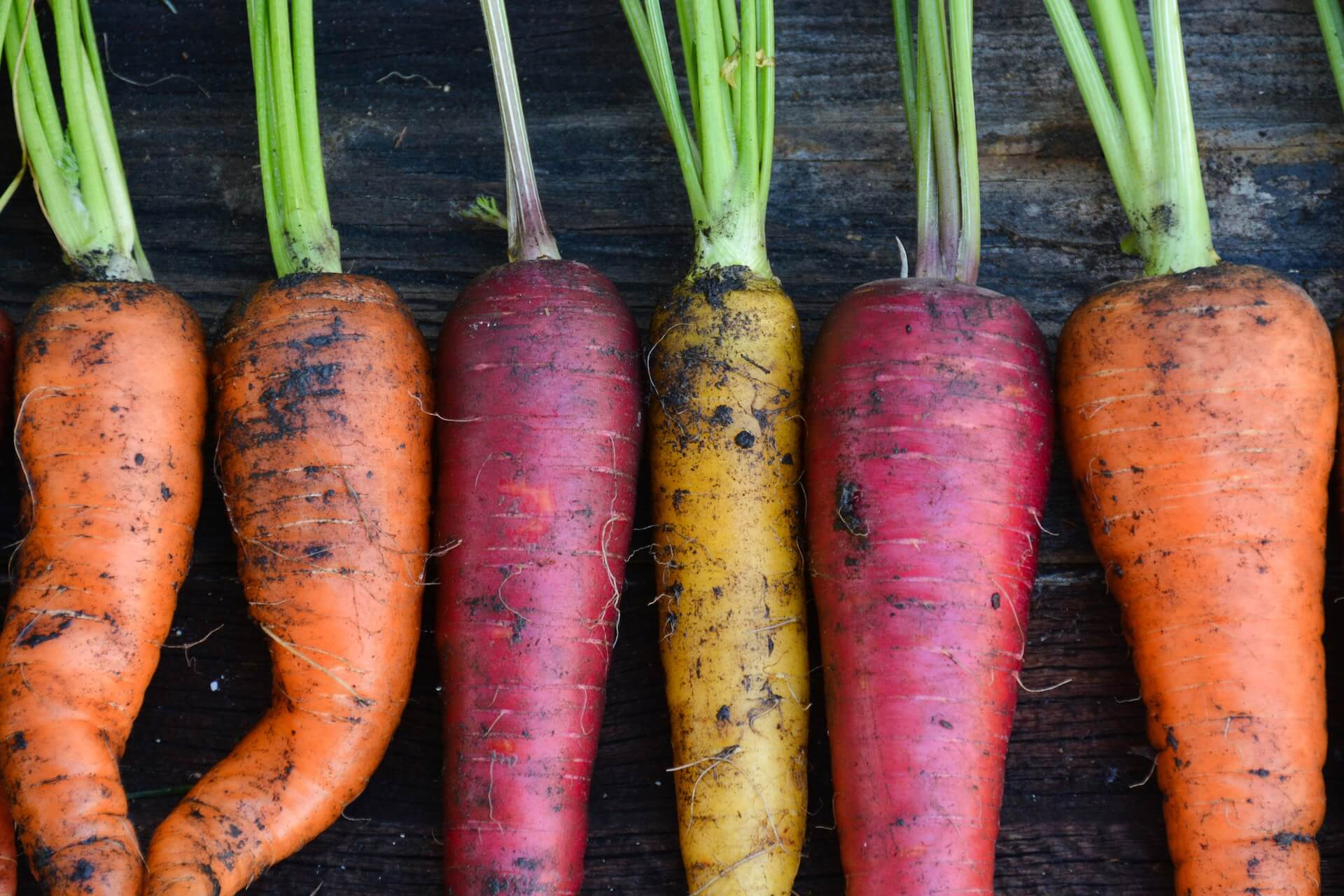 Freshly harvested organic rainbow carrots, orange, yellow, and purple