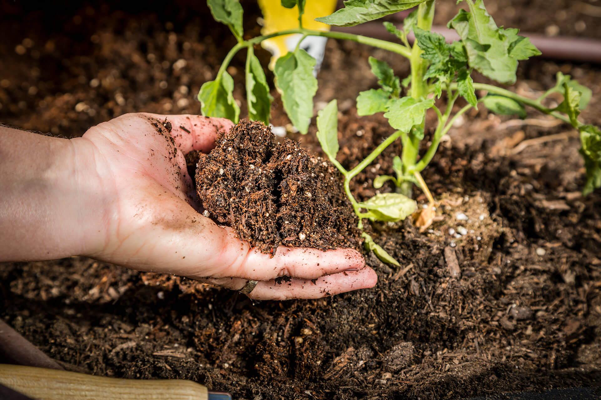 Man holding soil.