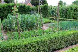 garden with teepee
