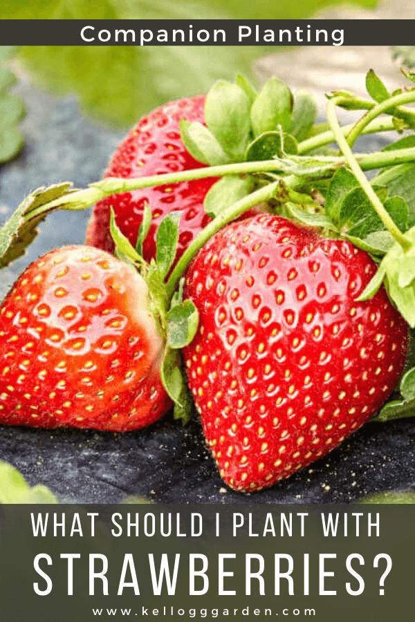 three red strawberry