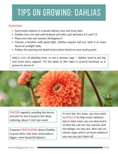 Flower Guide Dahlias Page