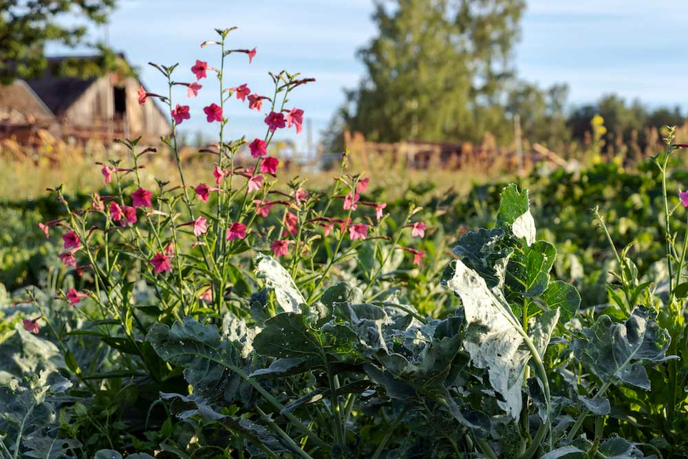 Vegetable and flower garden growing in the countryside.