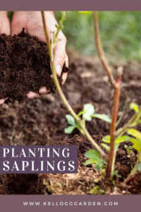 """Hand holding soil to plant a tree with text, """"planting saplings"""""""