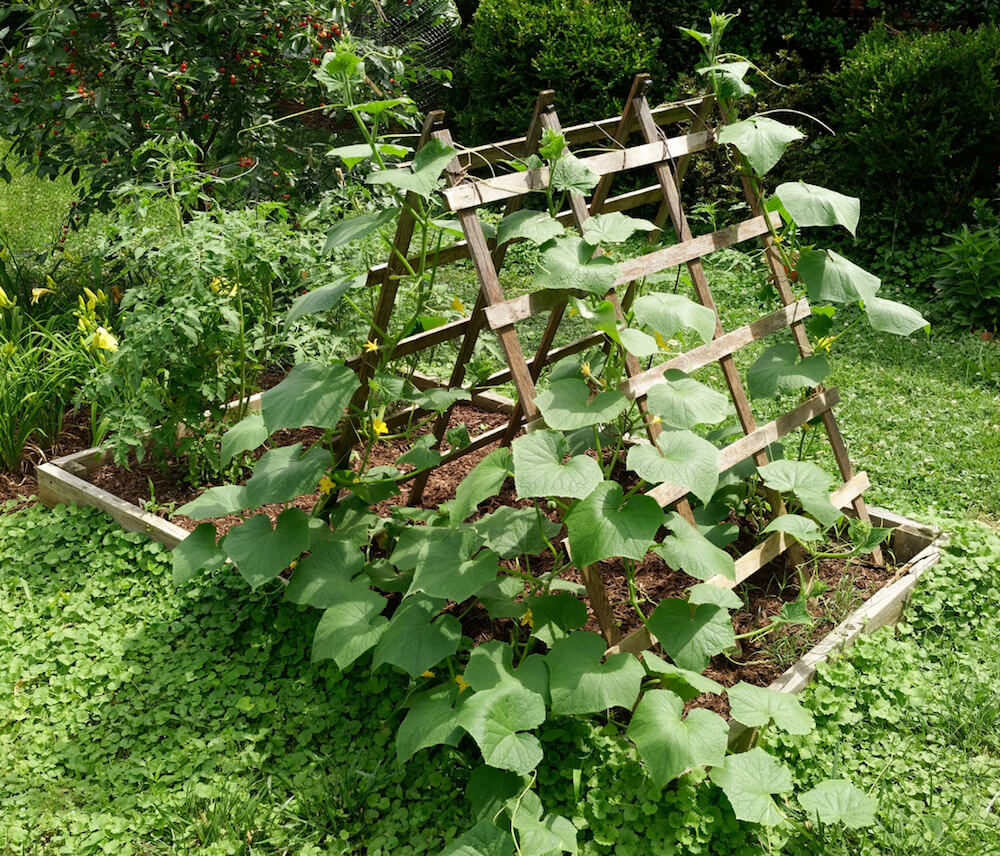 Vegetable Planter with Trellis.
