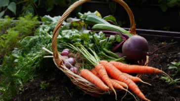 Basket with ripe vegetables carrot beetroot and zucchini