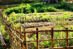 Wood log fence around a garden.