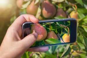 using phone to identify fruit