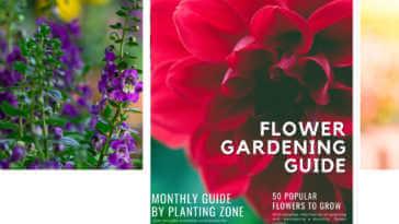Flower Gardening Guide