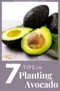 open avocado pin image