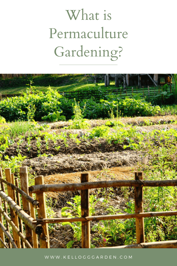 permaculture garden pin image