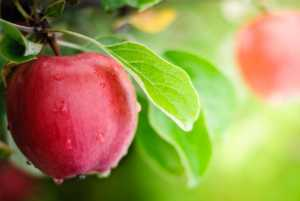 red apples with water dripping on them