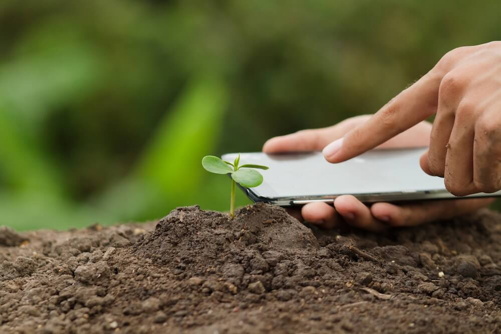 Hand using mobile phone checking seedling plant health