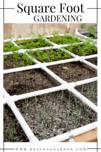 square foot gardening pin image