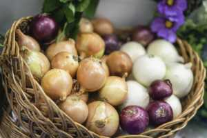 Assorted onions of different varieties in basket, yellow, white, purple onions