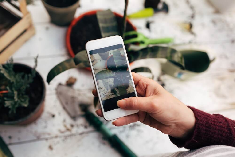 taking photos of plants using smartphone