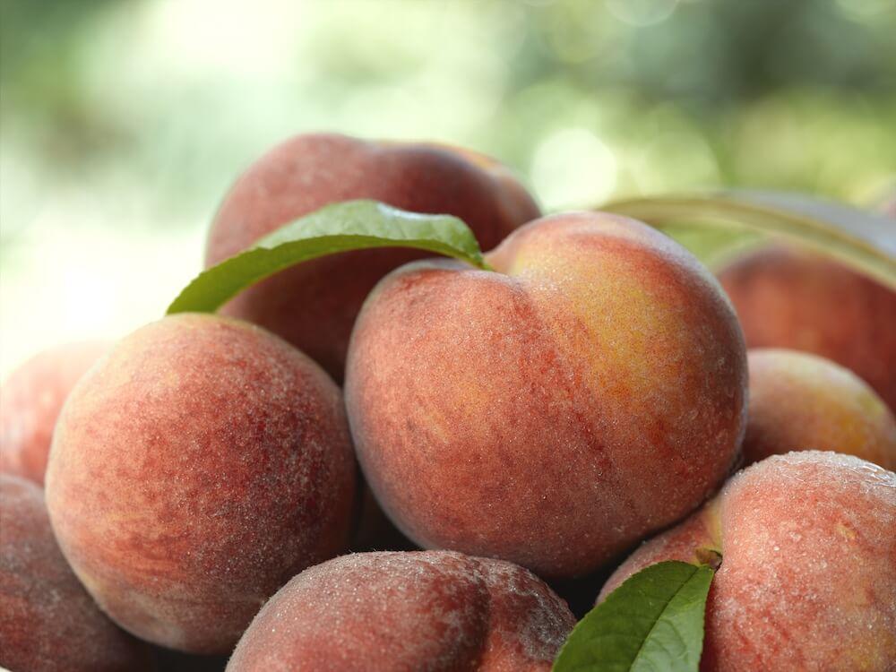 upclose pink reddish peaches
