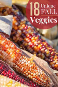 "Close up photo of ornamental corn with text, ""18 unique fall vegetables to grow"""