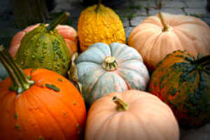 Pile of different colored and types of pumpkins.