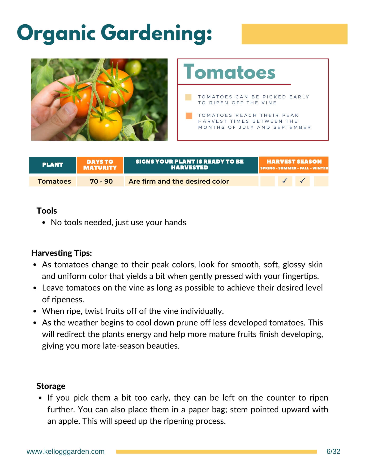 Harvesting guide page on harvesting tomatoes.