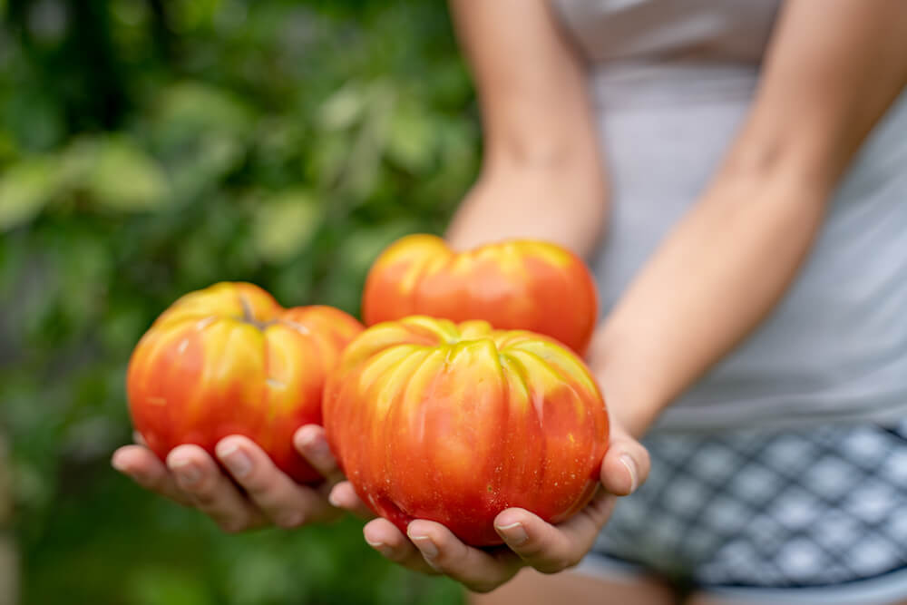 Woman holding beefsteak tomatoes.