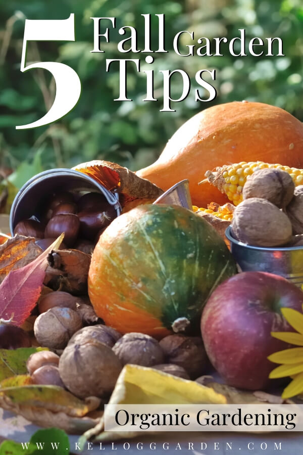 "Fall layout with assorted fall veggies with text, ""5 fall garden tips, organic gardening"""