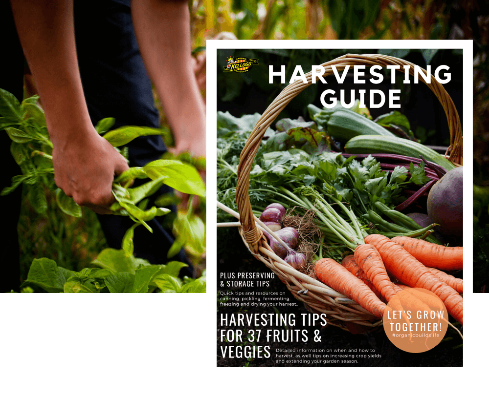 harvesting guide website image, cover of harvest guide with a background photo of a woman harvesting.