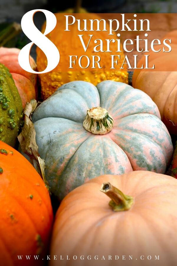 "Different varieties of pumpkins with text, ""8 pumpkin varieties for fall"""