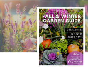 fall and winter cover image