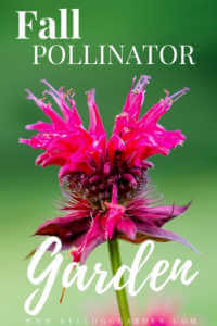 """Pink flower with text, """"Fall pollinator garden"""""""